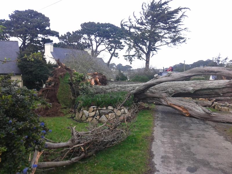 Démontage d'un arbre tombé pendant une tempête