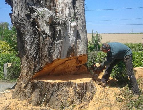 Abattage d'un arbre délicat