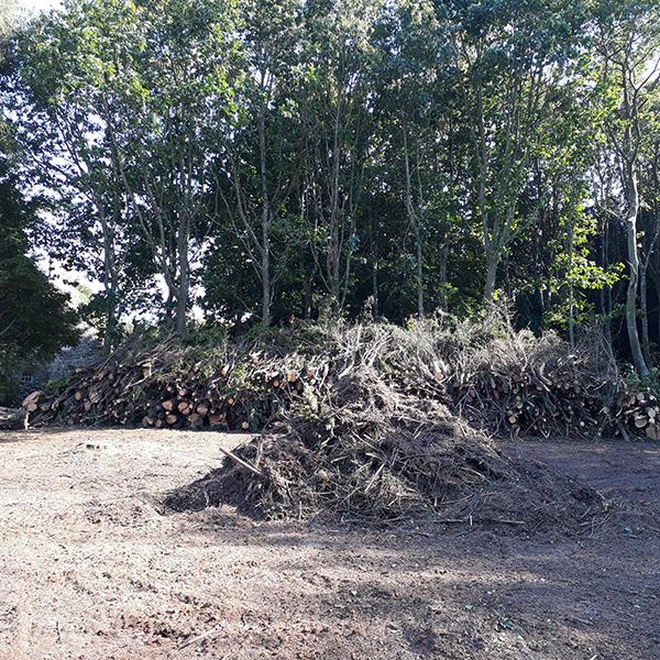 abattage d'arbre et défrichage dans les côtes-d'Armor 22