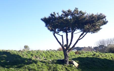 Taille de mise en forme d'un arbre par arbor création